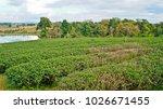 tea plantation in chiang rai ... | Shutterstock . vector #1026671455
