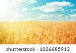 Beautiful Rural Landscape Wheat ...