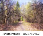 early spring landscape. a path... | Shutterstock . vector #1026719962