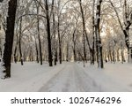 winter park with trees covered...   Shutterstock . vector #1026746296