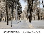 winter park with trees covered... | Shutterstock . vector #1026746776