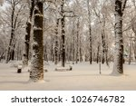 winter park with trees covered... | Shutterstock . vector #1026746782