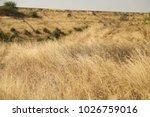 rural area fields india | Shutterstock . vector #1026759016
