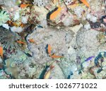 tropical fish and corals... | Shutterstock . vector #1026771022