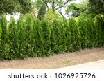 beautifully trimmed and... | Shutterstock . vector #1026925726