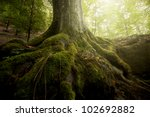 Tree Roots And Sunshine In A...