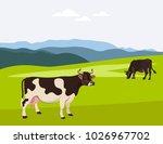 cows grazing on a summer... | Shutterstock .eps vector #1026967702