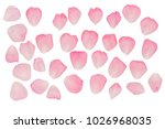 Stock photo a set of rose petals rose petal pink rose 1026968035