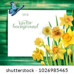 daffodils flowers on the wooden ... | Shutterstock .eps vector #1026985465