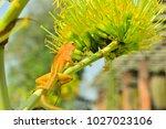 chameleon in thailand | Shutterstock . vector #1027023106