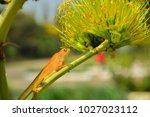 chameleon in thailand | Shutterstock . vector #1027023112