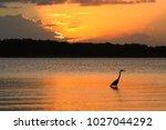 silhouette of great blue heron... | Shutterstock . vector #1027044292