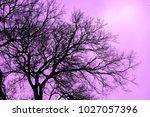dry tree branches against light ...   Shutterstock . vector #1027057396