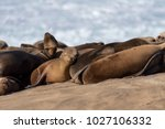 baby sea lion sleeping in the...   Shutterstock . vector #1027106332