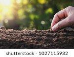 farmer hand planting bean of...   Shutterstock . vector #1027115932