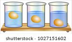 difference between density and... | Shutterstock .eps vector #1027151602