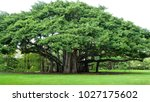 Banyan Tree Gives Support By...