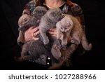 Small photo of hug many cats
