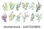 watercolor illustration. ... | Shutterstock . vector #1027320805