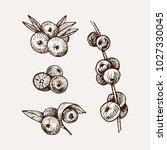 set of hand drawn acai....   Shutterstock .eps vector #1027330045