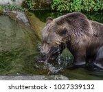 beautiful wet male bear going...   Shutterstock . vector #1027339132