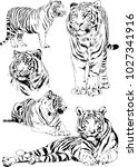vector drawings sketches... | Shutterstock .eps vector #1027341916