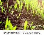 fresh green spring grass with... | Shutterstock . vector #1027344592
