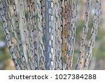 flying disk goal | Shutterstock . vector #1027384288