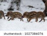 baby boar in the snowy forest.   Shutterstock . vector #1027386076
