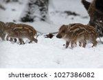 baby boar in the snowy forest.   Shutterstock . vector #1027386082