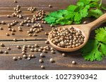 coriander seed and leaf on wood ... | Shutterstock . vector #1027390342