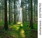 spruce tree forest  sunbeams... | Shutterstock . vector #1027396702