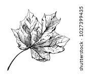 vector maple autumn drawing... | Shutterstock .eps vector #1027399435