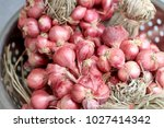 fresh shallots or onion bulb... | Shutterstock . vector #1027414342