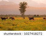 milk cows on green glass with... | Shutterstock . vector #1027418272