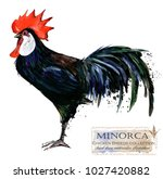 minorca rooster. poultry... | Shutterstock . vector #1027420882