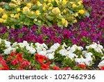 beautiful flowerbed with... | Shutterstock . vector #1027462936