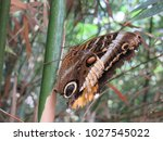 a yellow edged giant owl... | Shutterstock . vector #1027545022