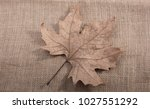 one separate dry leaf  of... | Shutterstock . vector #1027551292