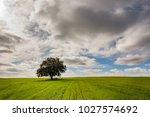 meadows of boil fresh green ... | Shutterstock . vector #1027574692