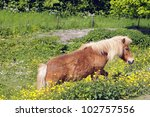 pony in meadow - stock photo
