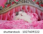 Stock photo the cat went to bed in a pink bed 1027609222