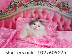 Stock photo the cat went to bed in a pink bed 1027609225