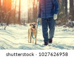 Stock photo man with dog on a leash walking on snowy pine forest in winter 1027626958