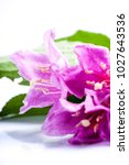 pink flowers with fresh green... | Shutterstock . vector #1027643536