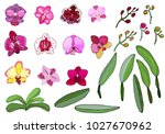 hand drawn set of orchid... | Shutterstock .eps vector #1027670962