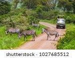 arusha  tanzania  january 23 ... | Shutterstock . vector #1027685512