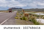 vicuna on the road in bolivia...   Shutterstock . vector #1027686616
