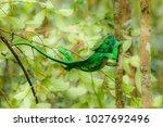 the common chameleon or... | Shutterstock . vector #1027692496