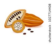 cocoa beans in different angles.... | Shutterstock .eps vector #1027714408
